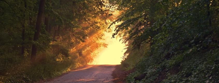 Licht am Ende des Waldweges